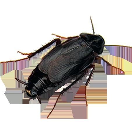 karabocek-ilaclama-icon